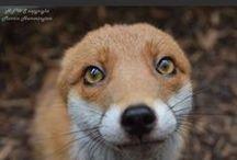 Animals / by Emma Clemenson