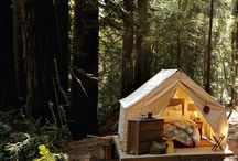 Outdoor Living / courtyards, treehouses, decks, etc.