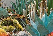 plants & picket fences / flora & exteriors.