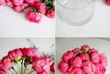 Floristry Tips & Tricks / Get the most out of your flowers and learn how to arrange your blooms with our floristry tips and tricks.