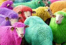Color! Color! Color!