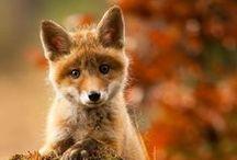 Sweet and Gentle Creatures