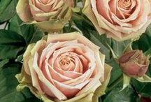 Flower Glossary  / Flowers, Flower Glossary, Wedding Flower Guide / by Maxit Flower Design