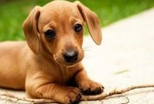 Lovable Doxies