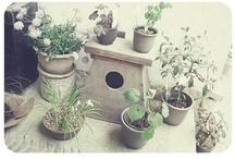 Garden Love  / by Kate