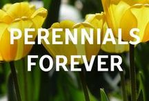 Perennials Forever / Looking to grow your gardening skills to a blossom? Check out our Perennials Forever blog!