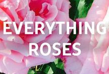 """Everything Roses / Looking to """"Fine Prune"""" your Roses? Check out our Everything Roses blog!"""