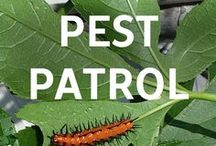 Pest Patrol / Need tips to keep out unwelcome garden guests? Check out our Pest Control blog!