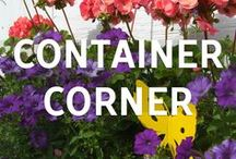 Container Corner / Are you looking to grow plants without the maintenance of a full garden? Check out our Container Corner blog!