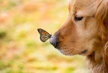 Dogs ! / Mans best friend  / by Joyce Yocum
