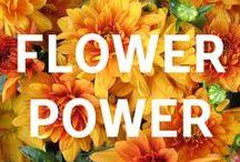 Flower Power / Fun flowers to enjoy.