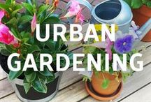 Urban/Small Space Gardening / Try bringing the outdoors inside with they cool ideas for urban gardening.