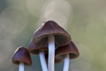Mushrooms & Fungi / by Pat Watson