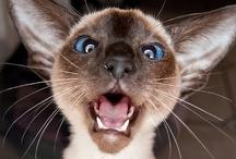 Crazy Cat Lady / by Tara Deighton