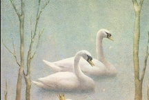 Swans, Geese, Ducks (Anatidae species) / Elegant, sweet, and cute photos of swans, geese, and ducks (Anatidae species). / by I Share My Pins!