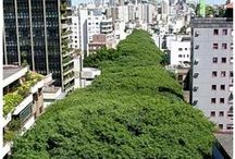 Urban Forests / The New Romanticism: Growing food and greening our cities for a more sustainable future.
