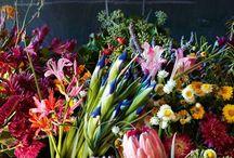 Flowers garden / Photo