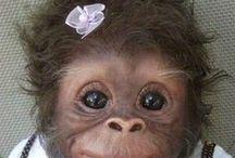 Que mono!!!