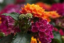 Garden Trends NEW PLANTS