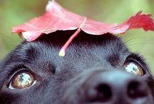 Fall~the best season / by Katie DeBari