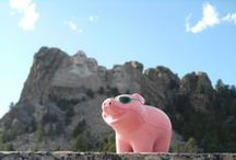 Have Pig, Will Travel / Effingham Pig travels local and far!  #HavePigWillTravel