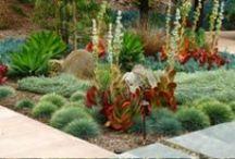 California Landscape DREAM / Drought Tolerant Landscaping Ideas for California / Mediterranean climates.