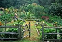 Garden_for green fingers / by Lara C.