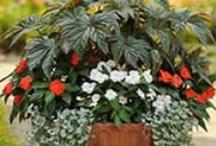 Container Gardening / by Patti Castilla