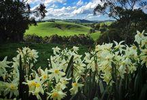 South Gippsland, my home. / Beautiful South Gippsland in Victoria, Australia