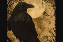Ravens (and other Corvids)