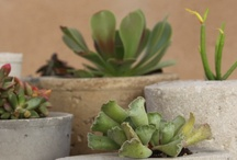 DIY - gardens and green ideas / by Magali Maleinge