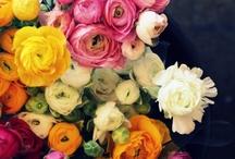 Flowers! / by Suzie McKay