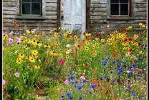 Garden ideas / by Jolene Barber