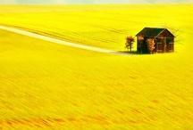 yellow - glorious