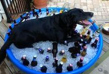 """Big, black dogs / Black dogs are not """"overlooked."""" They are popular!"""