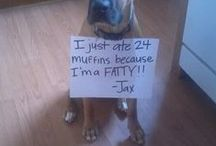 Dog shaming / We have to get back at them somehow :)