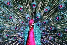 Birds! / Birds, Birds And Colorful Birds