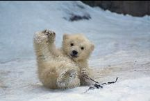 Cute Animals / There are so many cute pictures of animals so I thought I'd start a board :)