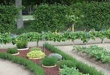 Gardening & Yard / by Angie Williams
