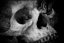 Butterflies / #butterflies #mystic animals #dark arts #animals in art