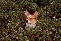Dog / by Susanna Mannelin