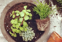 Green-Thumb Inspirations / Gardening Ideas and How-Tos / by Kitty Calico