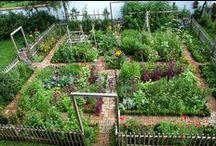 Garden / by Rana LOVE