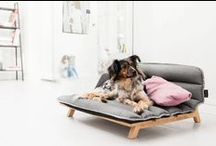 Bichinhos | Pets