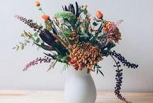 Jardim, Horta, Plantas e Flores | Garden, Plants & Flowers