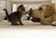 Cats and Dogs / Awww... / by Kitty Calico