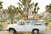 Joshua Tree / by Kelly Mickle