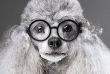 Animals in Glasses / by Kitty Calico