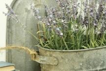 Garden, Yard, and Porch / by Annie Besancon