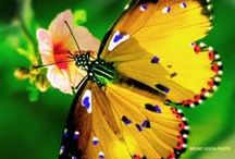 Gardens With Wings  Ƹ̵̡Ӝ̵̨̄Ʒ / Butterfly  Flutter by, Butterfly, Floating flower in the sky. Kiss me with your Petal wings— Whisper secrets, Tell of spring.  Author Unknown / by Cecilia Dudley
